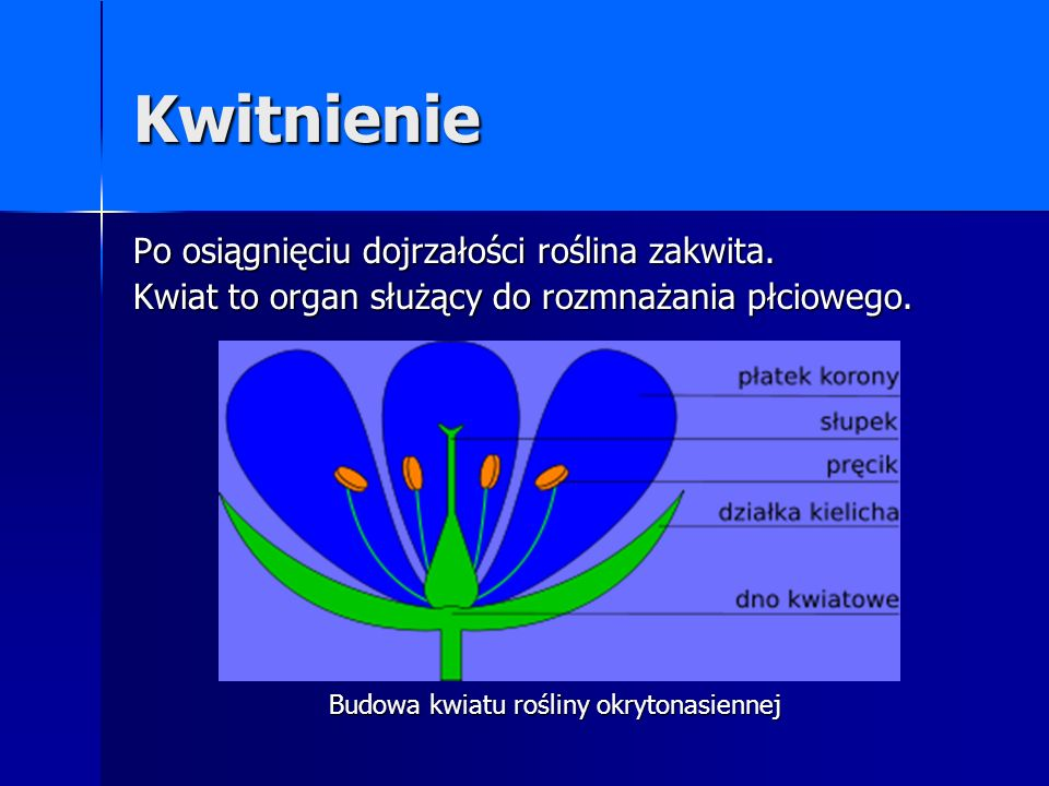 Budowa kwiatu rośliny okrytonasiennej