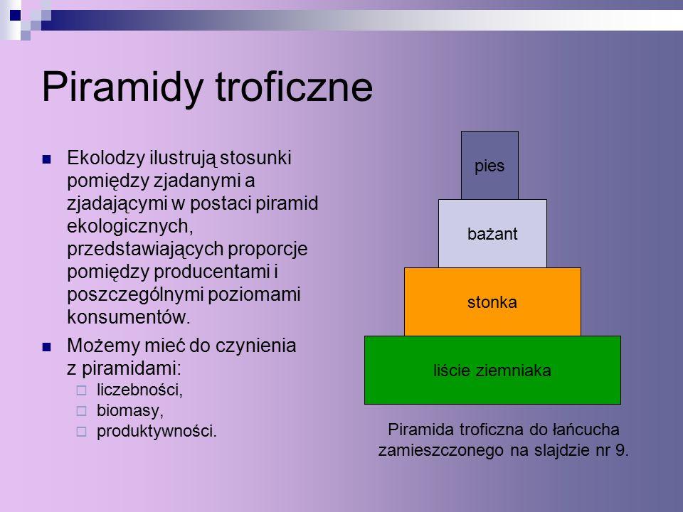 Piramida troficzna do łańcucha zamieszczonego na slajdzie nr 9.