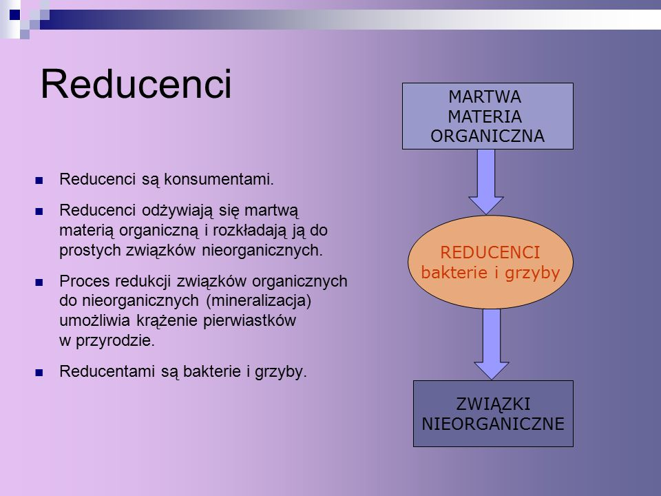 Reducenci MARTWA MATERIA ORGANICZNA Reducenci są konsumentami.