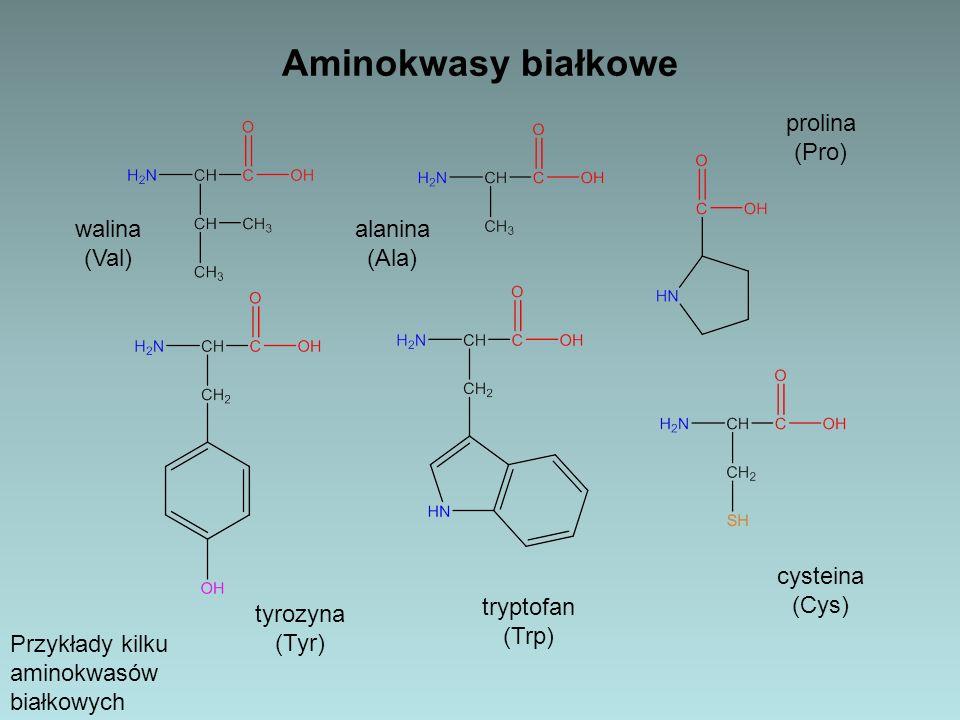 Aminokwasy białkowe prolina (Pro) walina (Val) alanina (Ala) cysteina