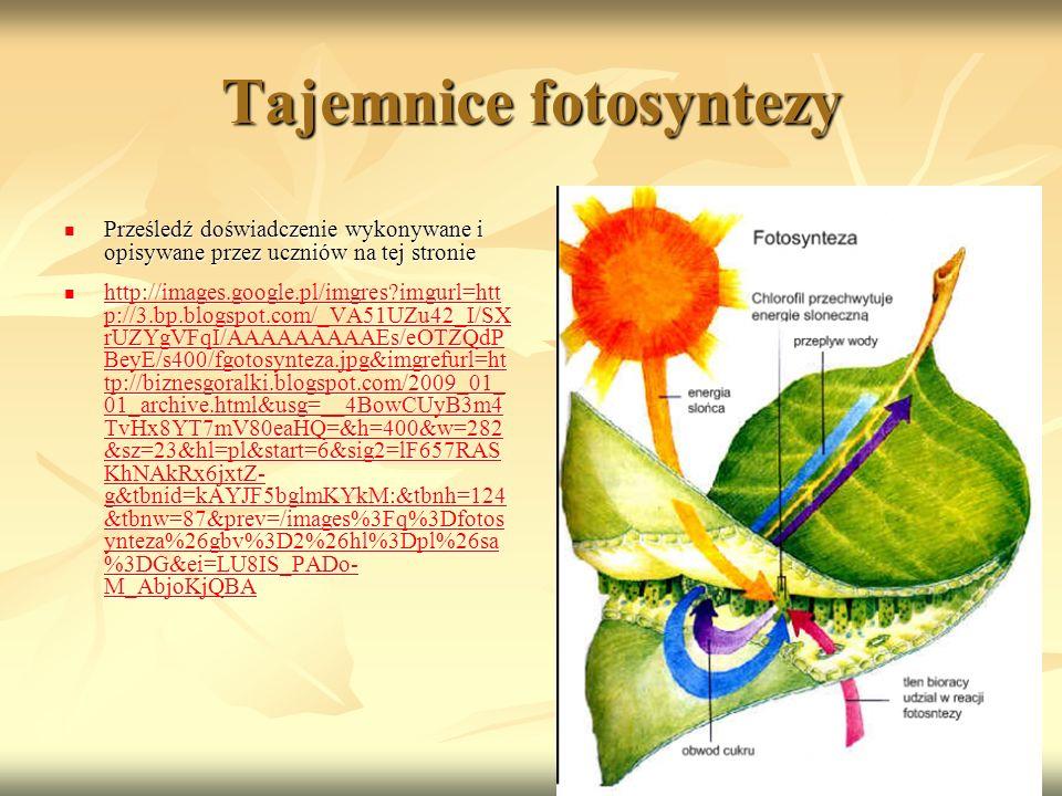 Tajemnice fotosyntezy