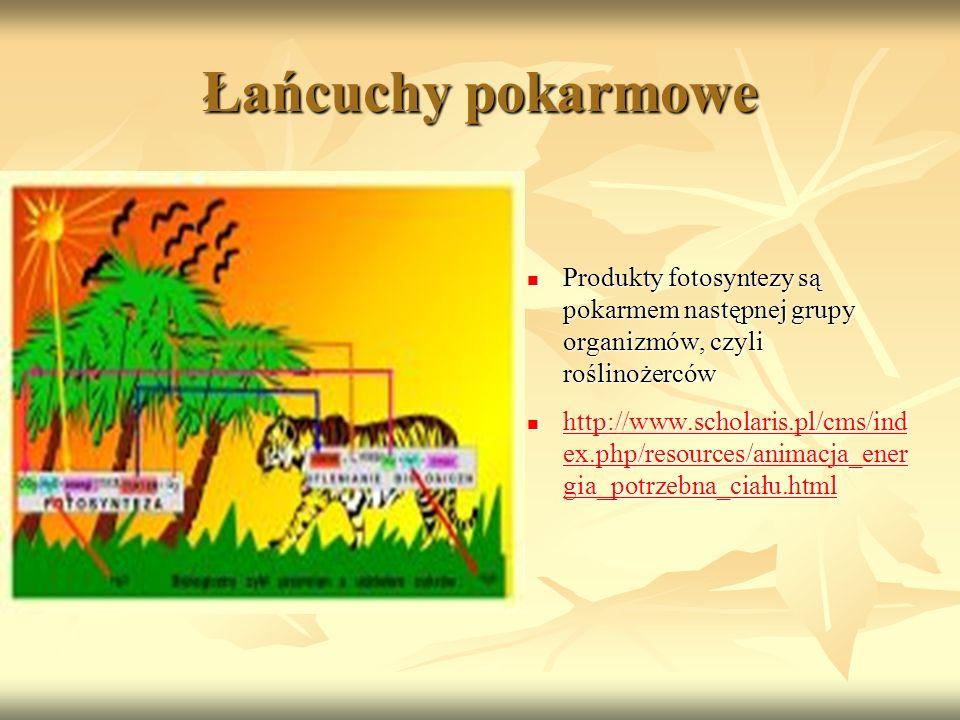 Łańcuchy pokarmowe Produkty fotosyntezy są pokarmem następnej grupy organizmów, czyli roślinożerców.