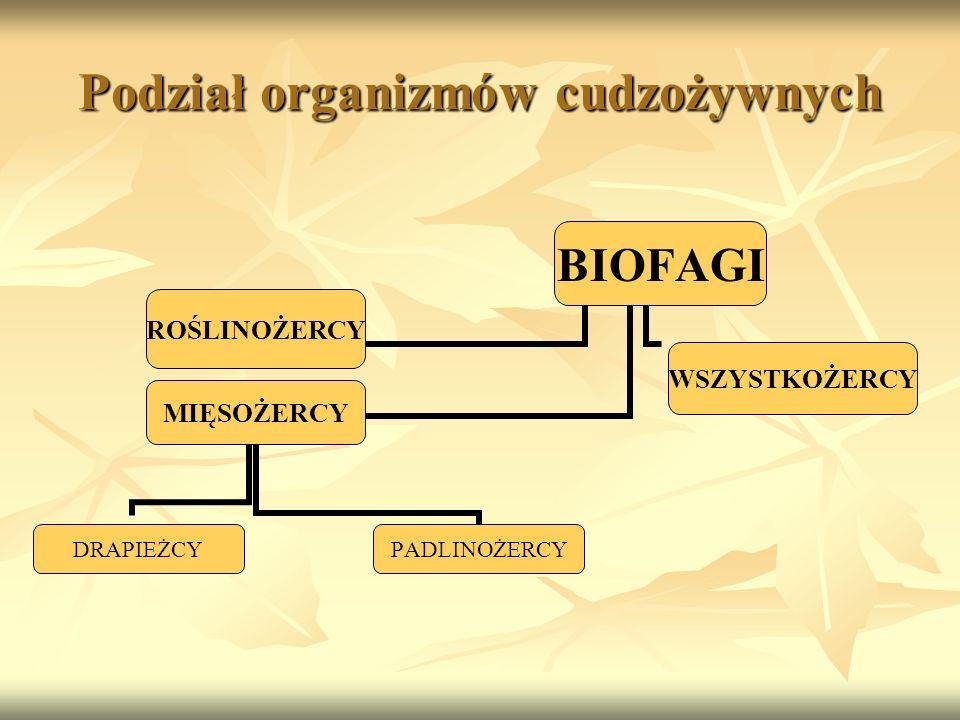 Podział organizmów cudzożywnych