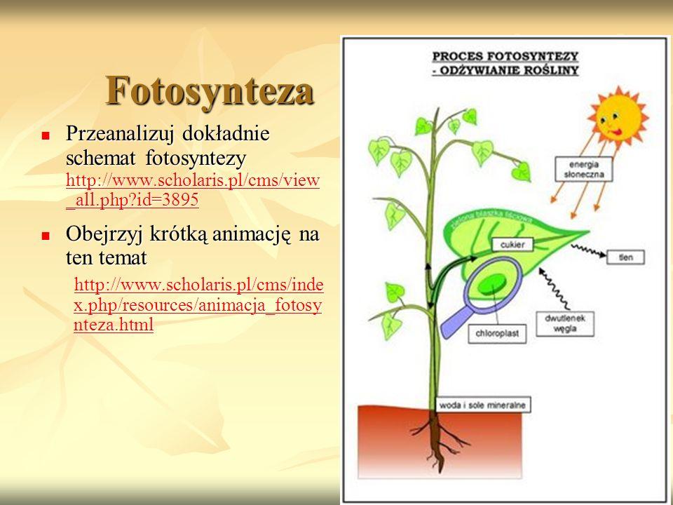 Fotosynteza Przeanalizuj dokładnie schemat fotosyntezy http://www.scholaris.pl/cms/view_all.php id=3895.
