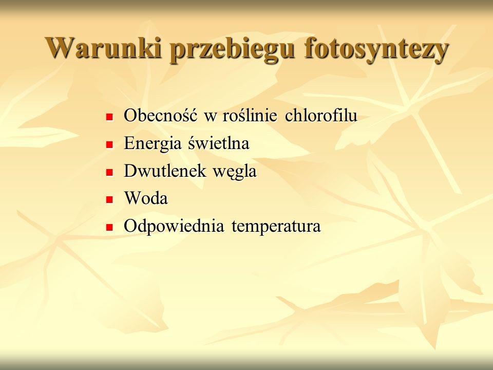 Warunki przebiegu fotosyntezy