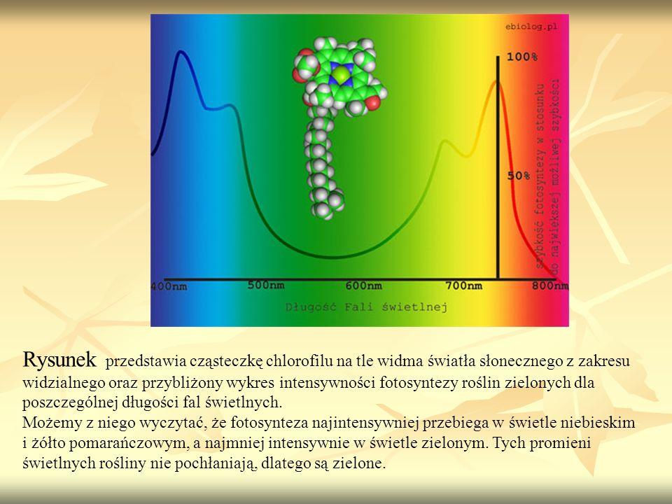 Rysunek przedstawia cząsteczkę chlorofilu na tle widma światła słonecznego z zakresu widzialnego oraz przybliżony wykres intensywności fotosyntezy roślin zielonych dla poszczególnej długości fal świetlnych.