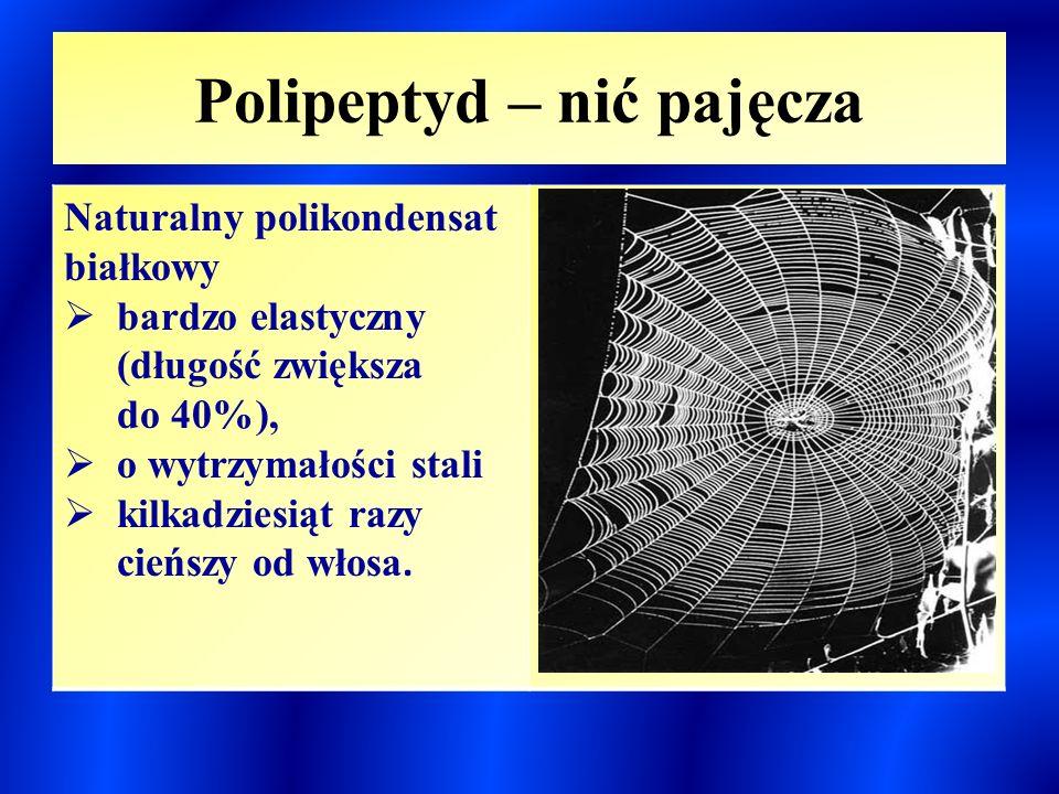 Polipeptyd – nić pajęcza