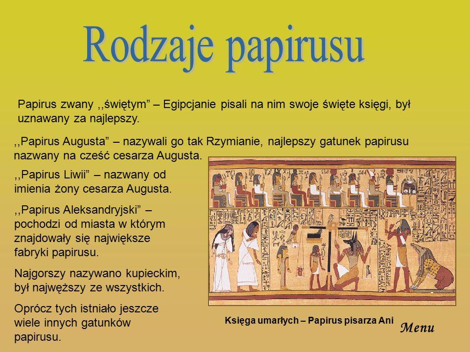 Rodzaje papirusu Papirus zwany ,,świętym – Egipcjanie pisali na nim swoje święte księgi, był uznawany za najlepszy.