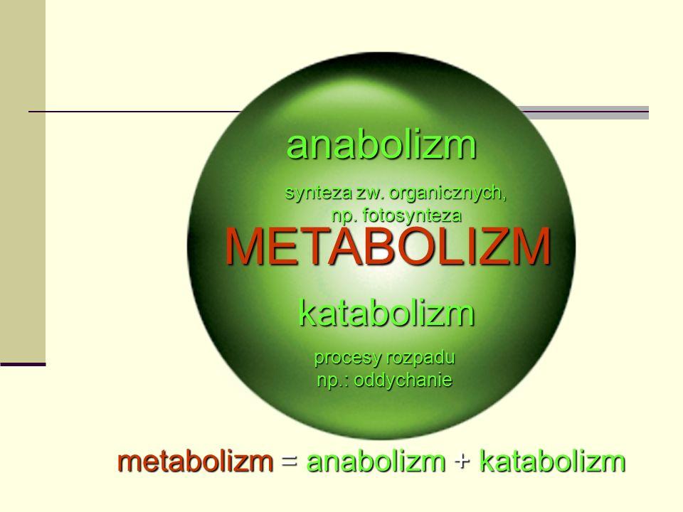 METABOLIZM anabolizm katabolizm metabolizm = anabolizm + katabolizm