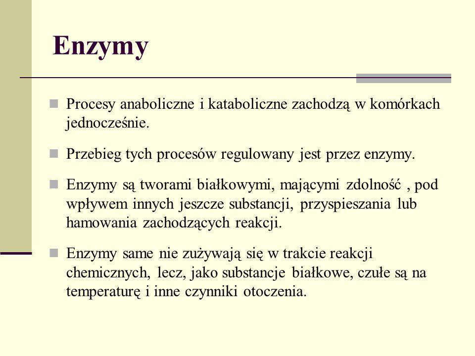Enzymy Procesy anaboliczne i kataboliczne zachodzą w komórkach jednocześnie. Przebieg tych procesów regulowany jest przez enzymy.