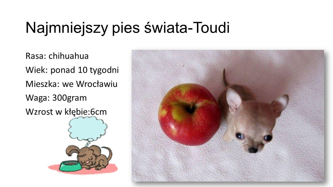 Najmniejszy pies świata-Toudi