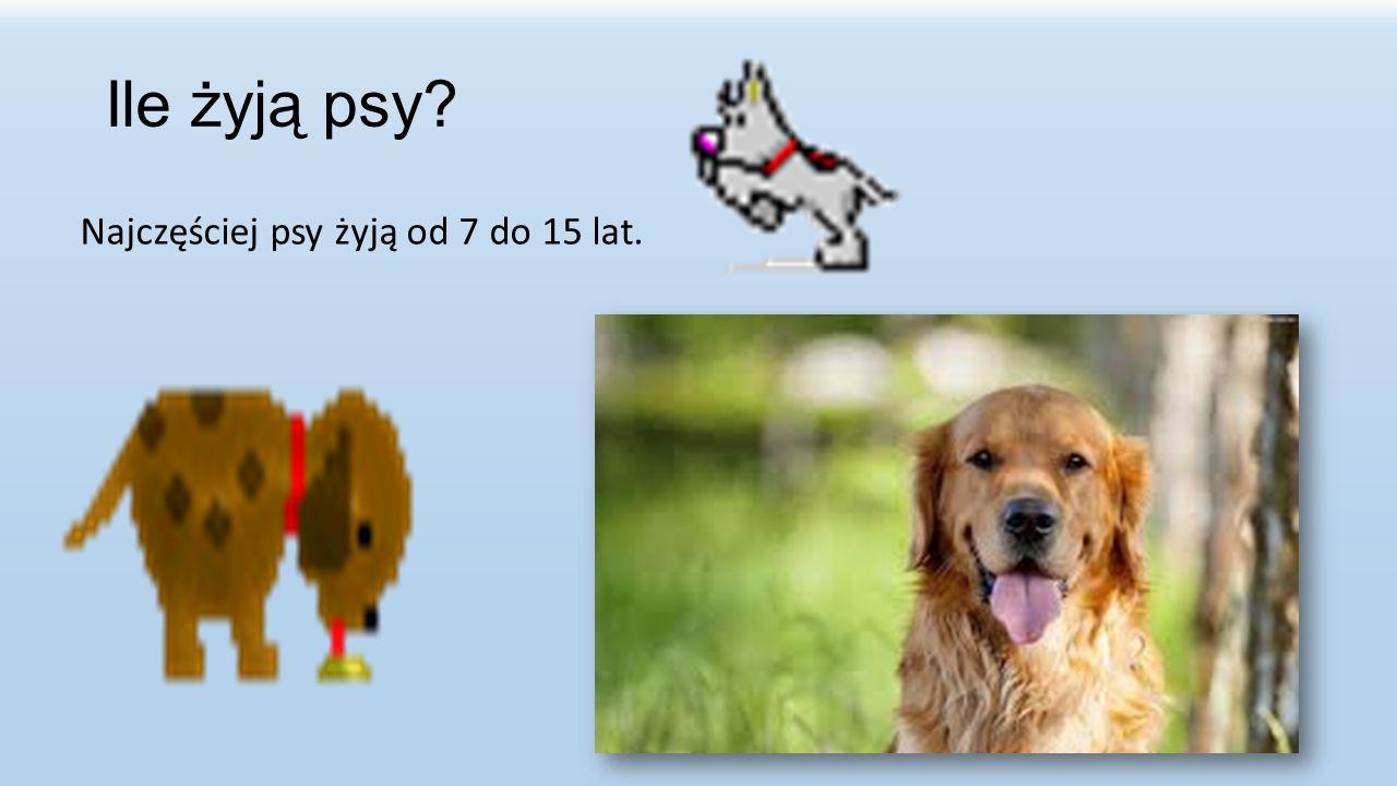 Ile żyją psy Najczęściej psy żyją od 7 do 15 lat.