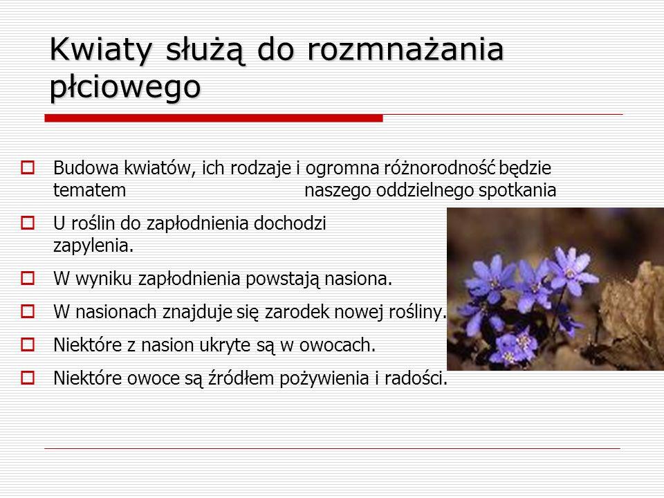 Kwiaty służą do rozmnażania płciowego
