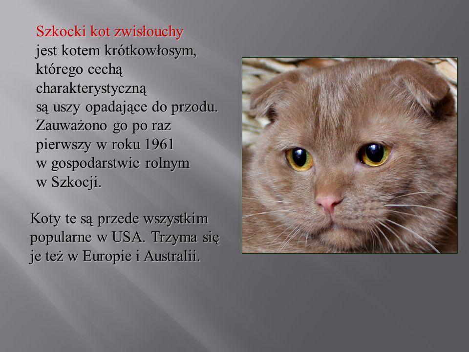 Szkocki kot zwisłouchy jest kotem krótkowłosym, którego cechą charakterystyczną są uszy opadające do przodu. Zauważono go po raz pierwszy w roku 1961 w gospodarstwie rolnym w Szkocji.