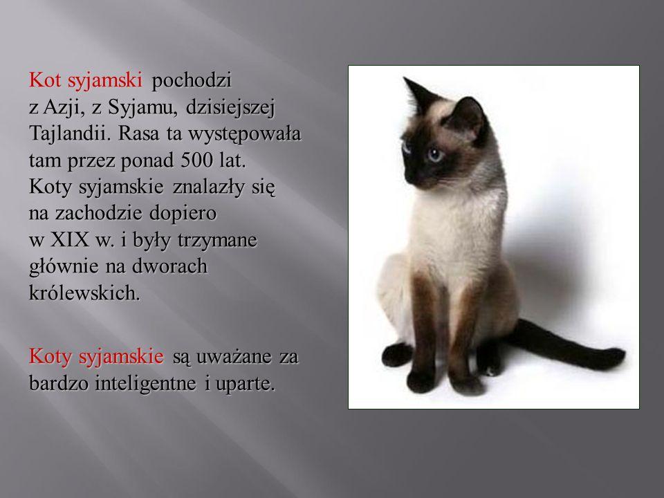 Kot syjamski pochodzi z Azji, z Syjamu, dzisiejszej Tajlandii