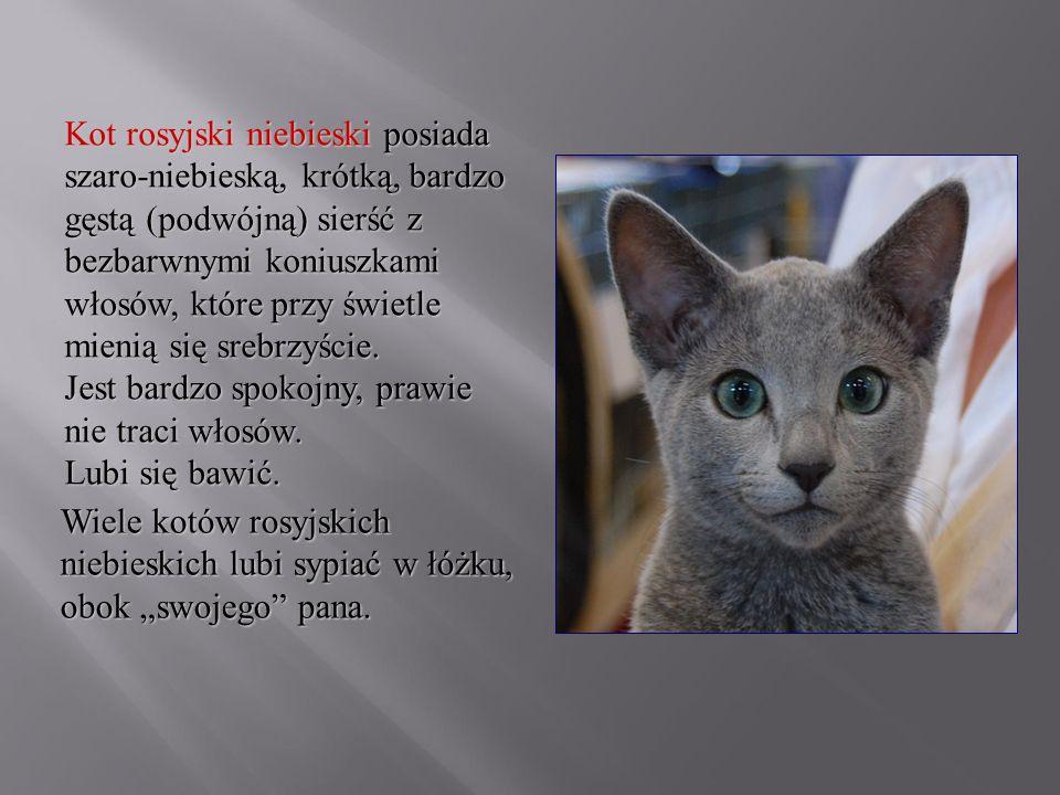 Kot rosyjski niebieski posiada szaro-niebieską, krótką, bardzo gęstą (podwójną) sierść z bezbarwnymi koniuszkami włosów, które przy świetle mienią się srebrzyście. Jest bardzo spokojny, prawie nie traci włosów. Lubi się bawić.