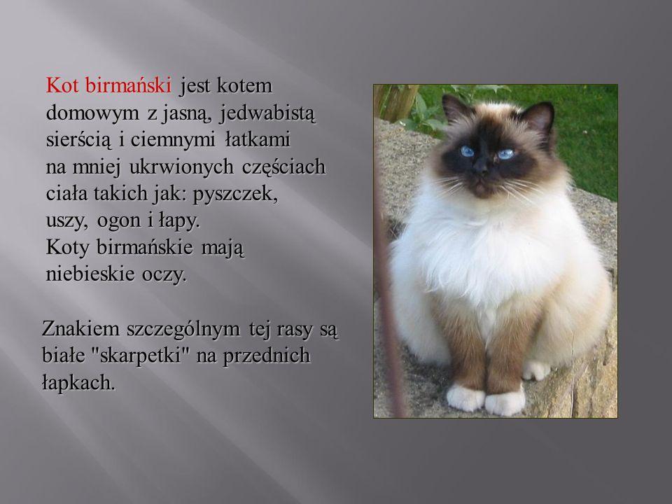Kot birmański jest kotem domowym z jasną, jedwabistą sierścią i ciemnymi łatkami na mniej ukrwionych częściach ciała takich jak: pyszczek, uszy, ogon i łapy. Koty birmańskie mają niebieskie oczy.