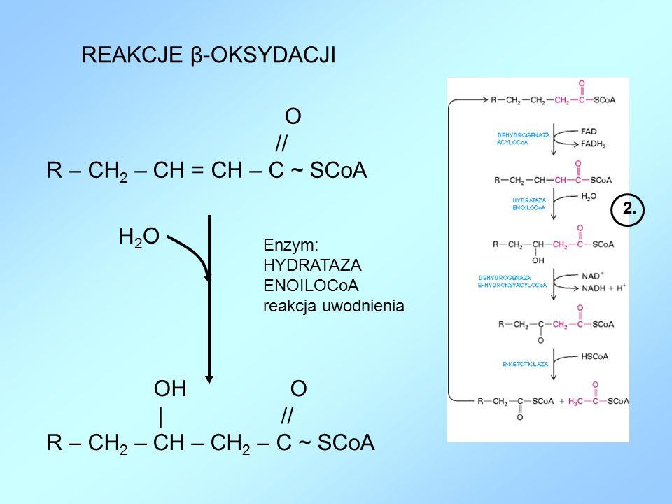 REAKCJE β-OKSYDACJI // R – CH2 – CH = CH – C ~ SCoA H2O | //