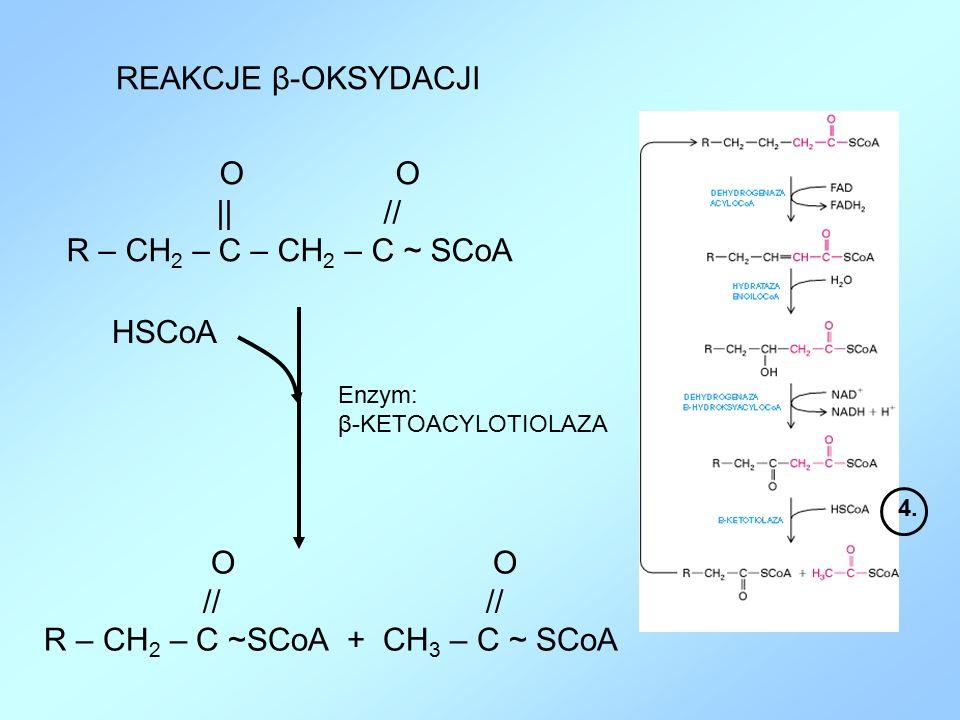 R – CH2 – C ~SCoA + CH3 – C ~ SCoA