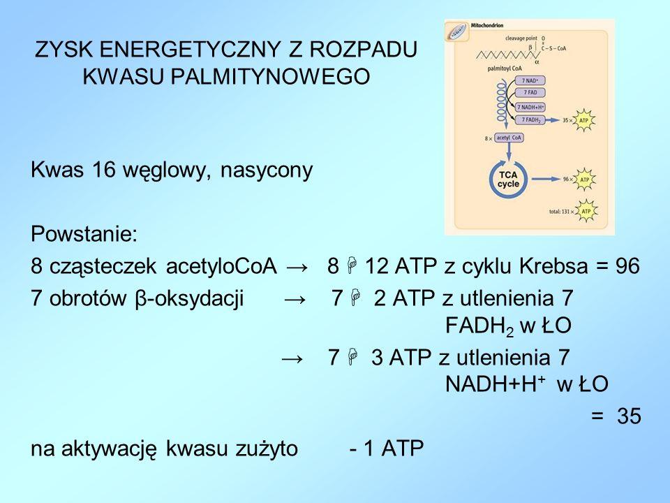 ZYSK ENERGETYCZNY Z ROZPADU KWASU PALMITYNOWEGO