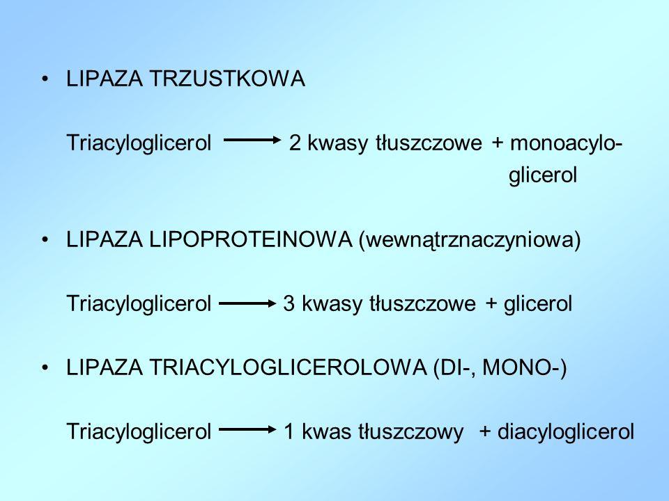 LIPAZA TRZUSTKOWA Triacyloglicerol 2 kwasy tłuszczowe + monoacylo- glicerol. LIPAZA LIPOPROTEINOWA (wewnątrznaczyniowa)
