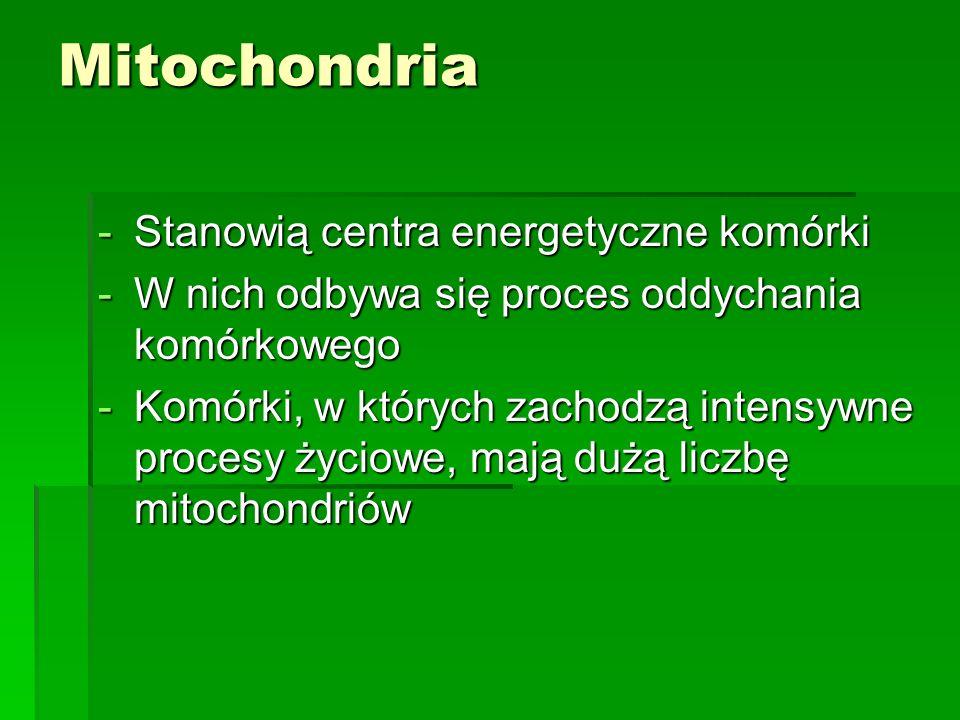 Mitochondria Stanowią centra energetyczne komórki