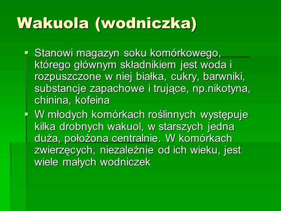 Wakuola (wodniczka)