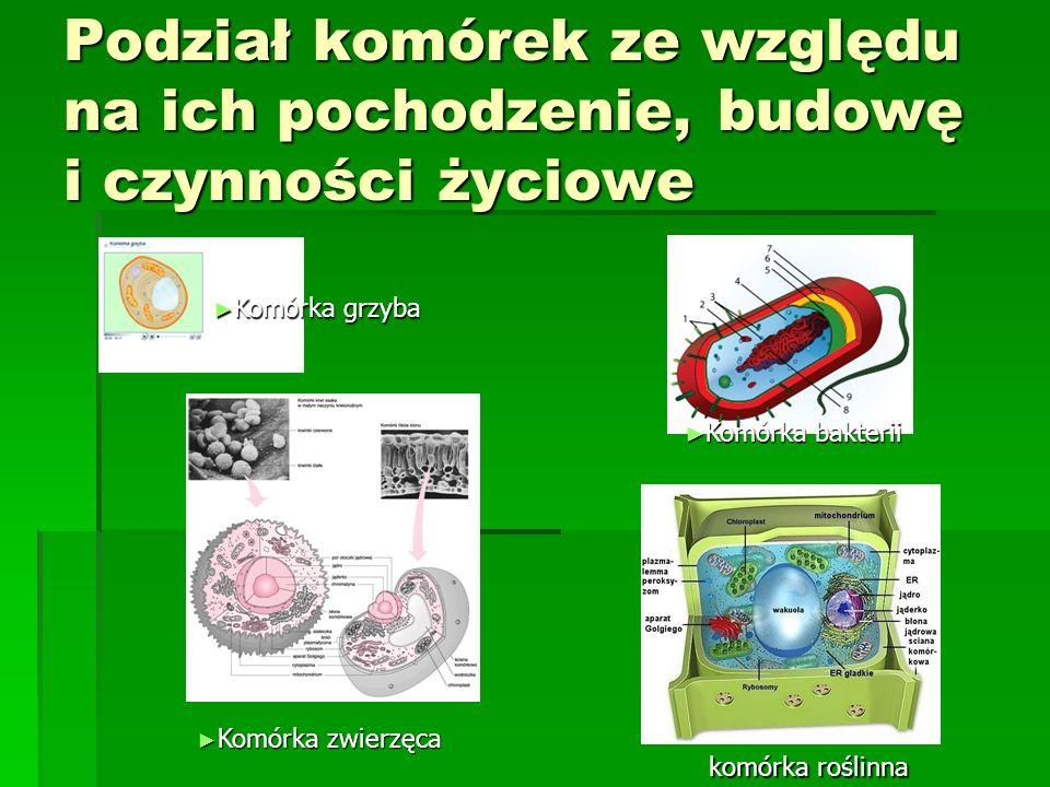 Podział komórek ze względu na ich pochodzenie, budowę i czynności życiowe