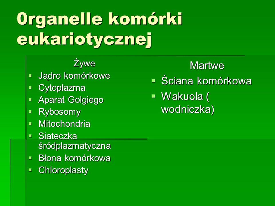 0rganelle komórki eukariotycznej