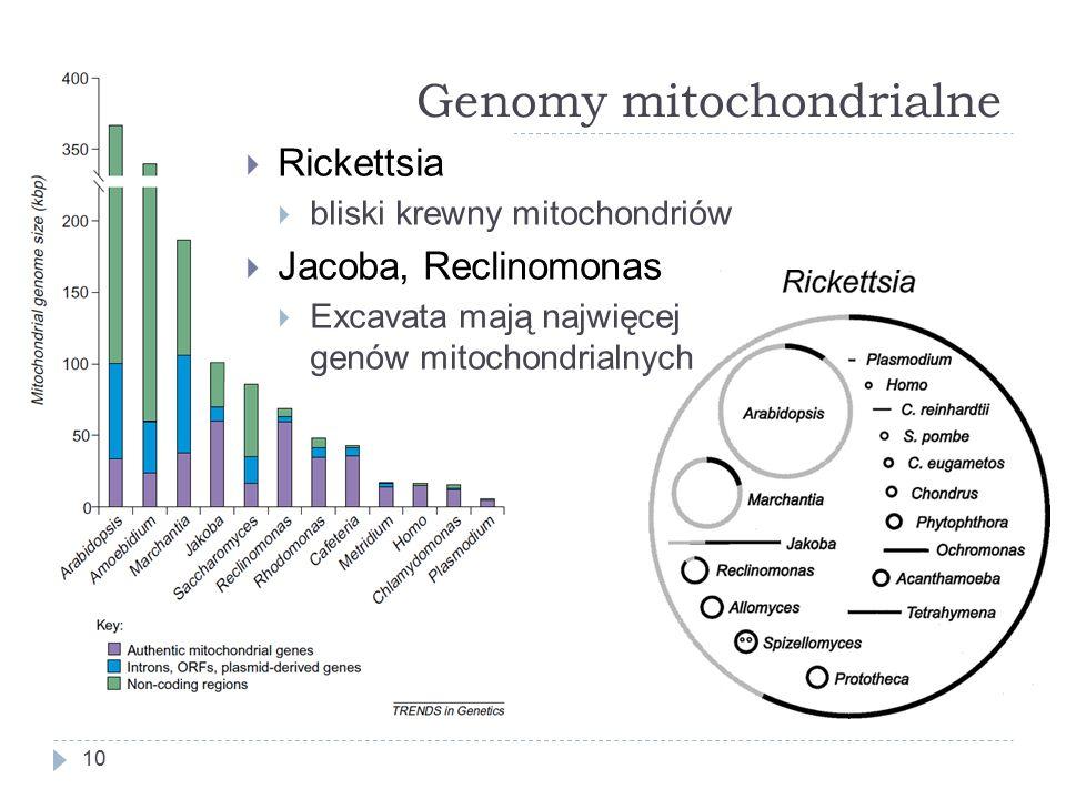 Genomy mitochondrialne