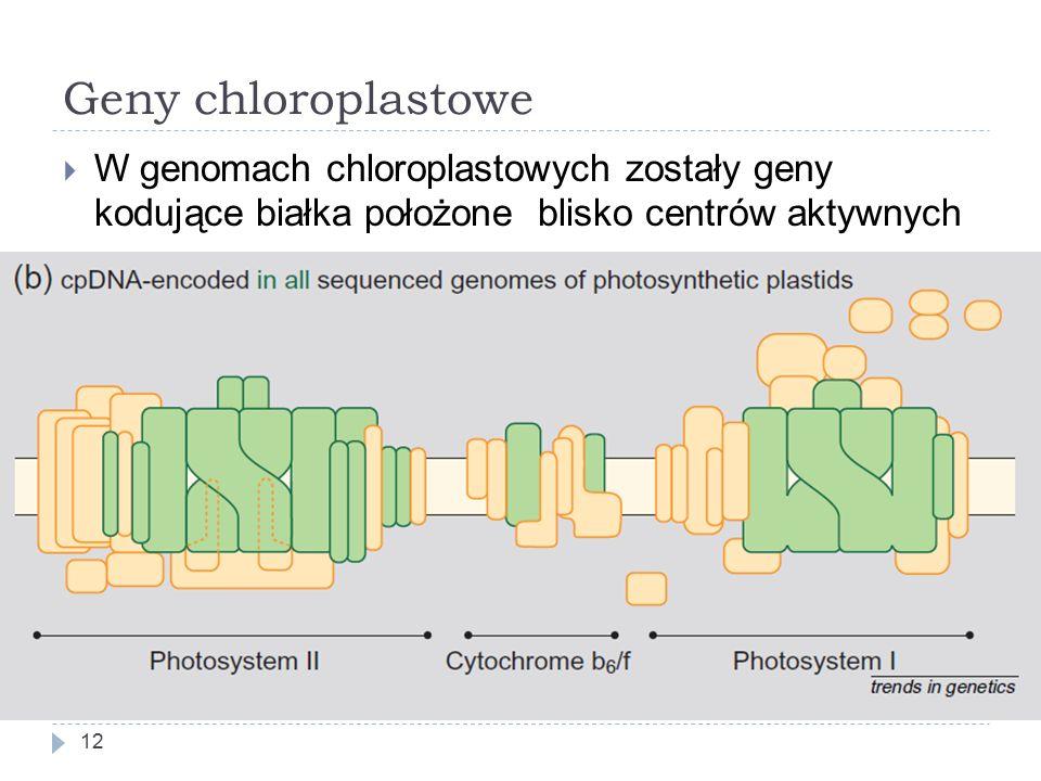 Geny chloroplastowe W genomach chloroplastowych zostały geny kodujące białka położone blisko centrów aktywnych.