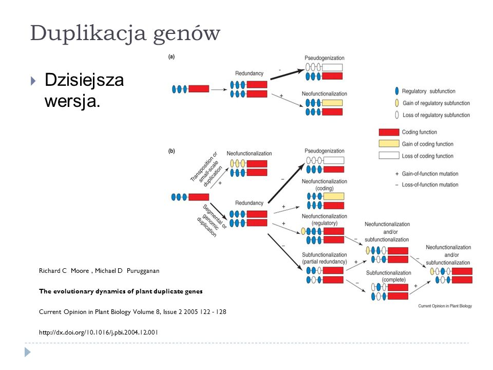 Duplikacja genów Dzisiejsza wersja.