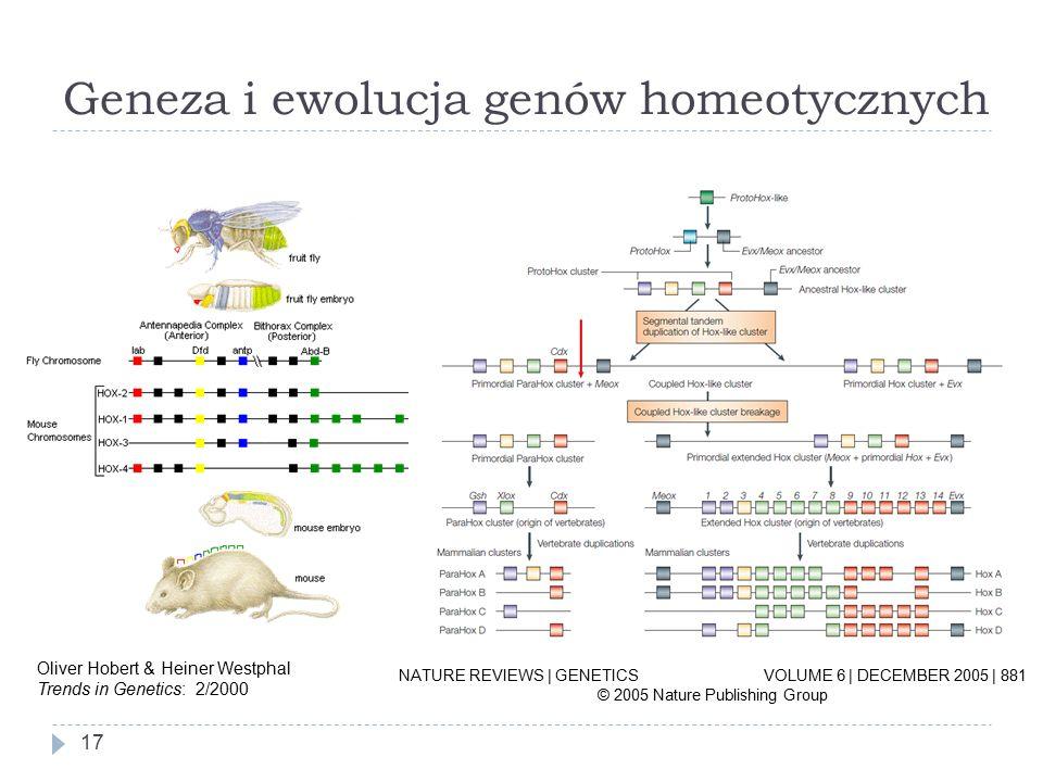 Geneza i ewolucja genów homeotycznych