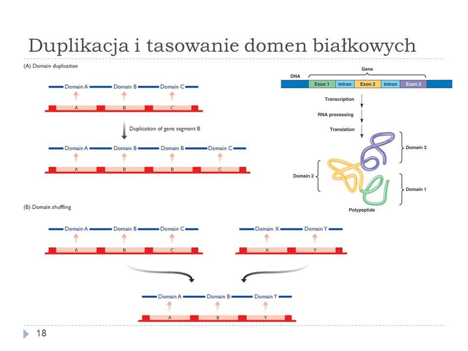 Duplikacja i tasowanie domen białkowych