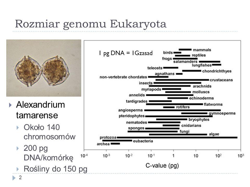 Rozmiar genomu Eukaryota