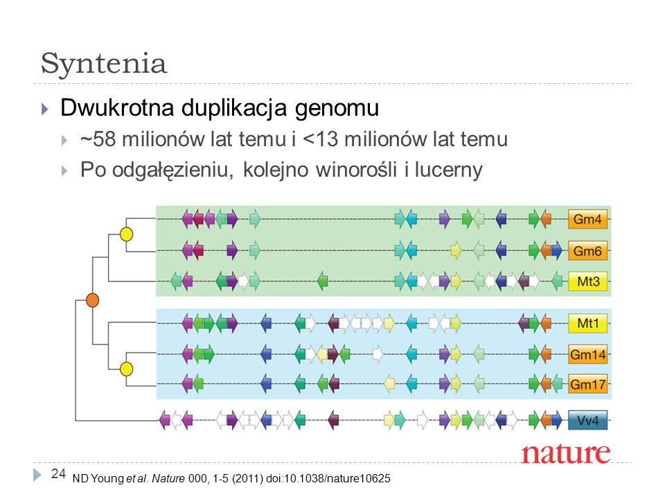 Syntenia Dwukrotna duplikacja genomu