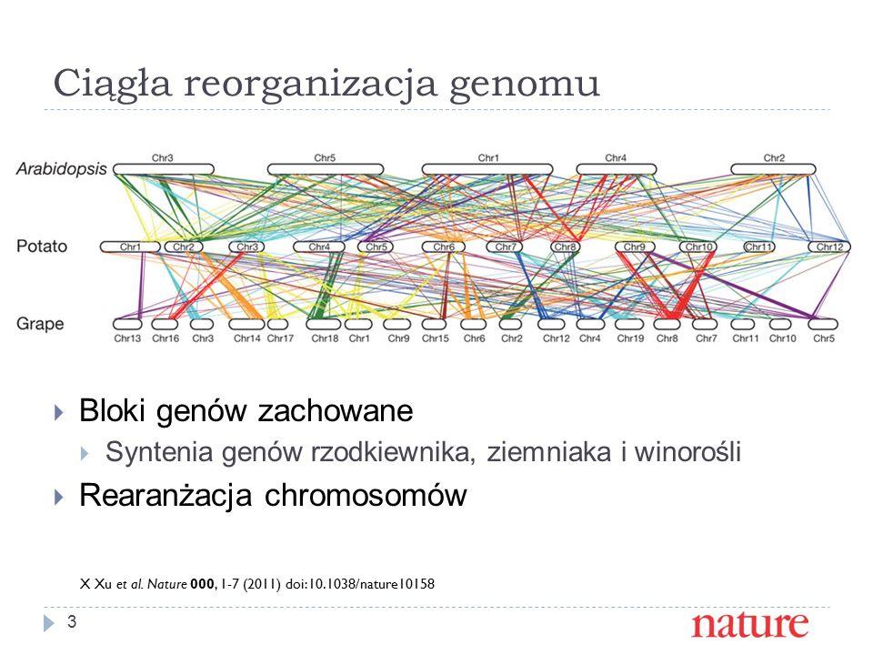 Ciągła reorganizacja genomu