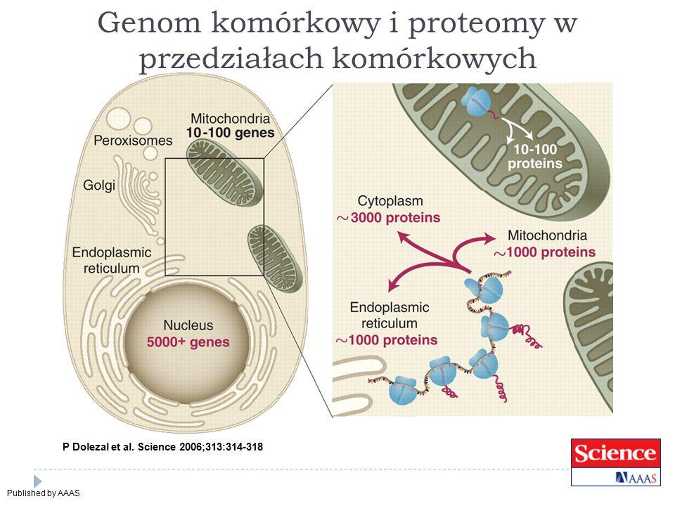 Genom komórkowy i proteomy w przedziałach komórkowych