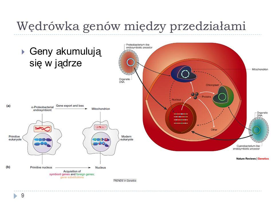 Wędrówka genów między przedziałami