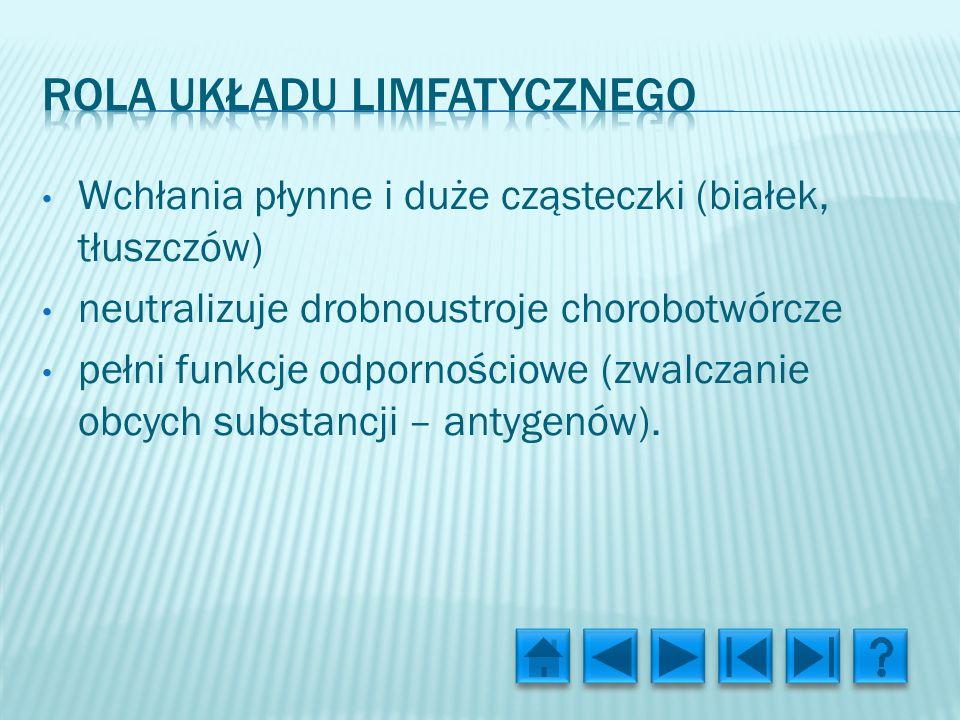Rola układu limfatycznego