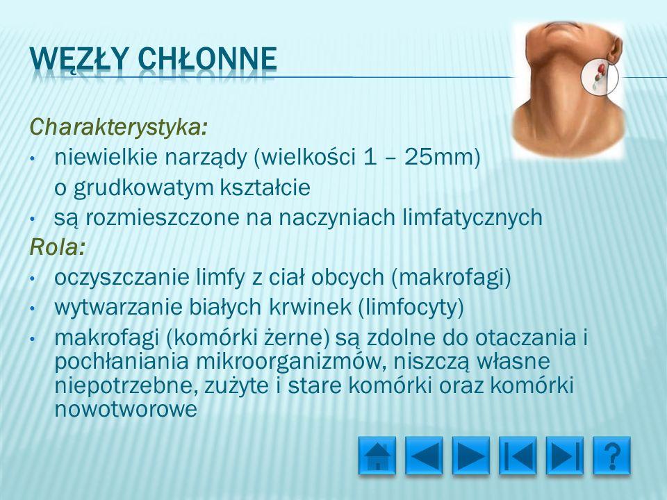 Węzły chłonne Charakterystyka: niewielkie narządy (wielkości 1 – 25mm)