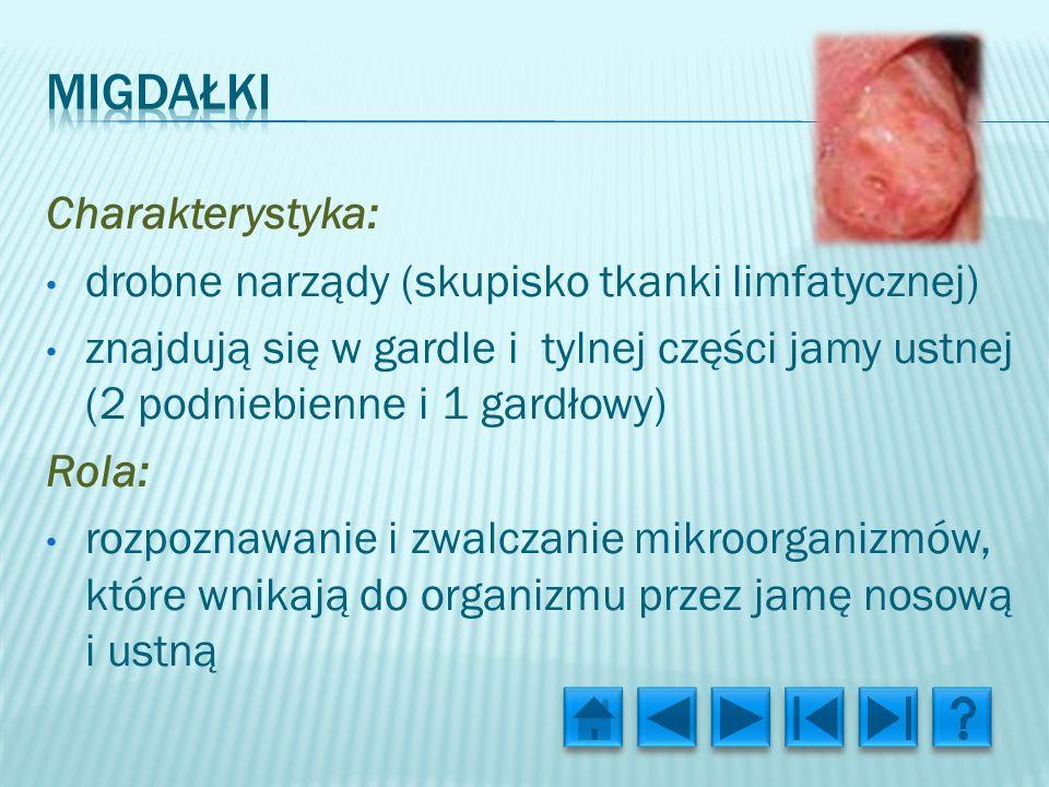 migdałki Charakterystyka:
