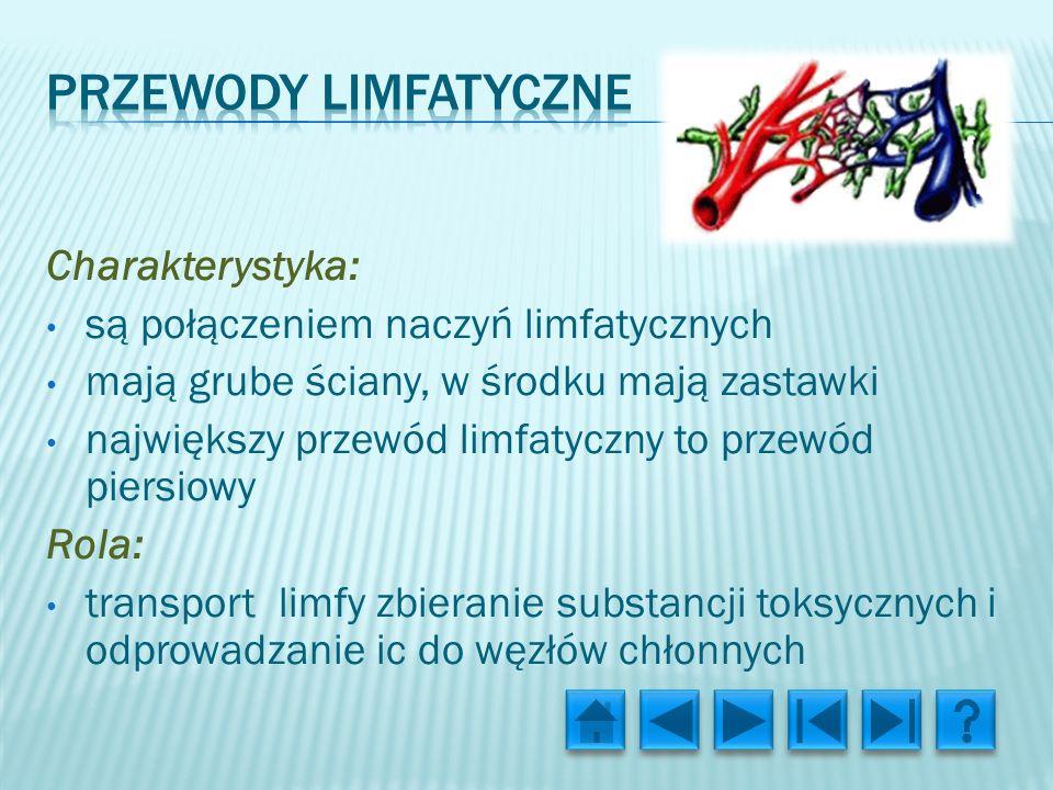Przewody limfatyczne Charakterystyka: