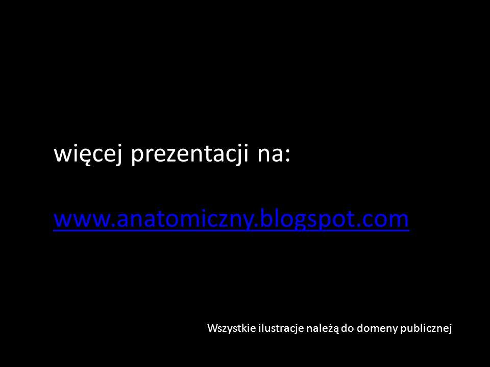 więcej prezentacji na: www.anatomiczny.blogspot.com