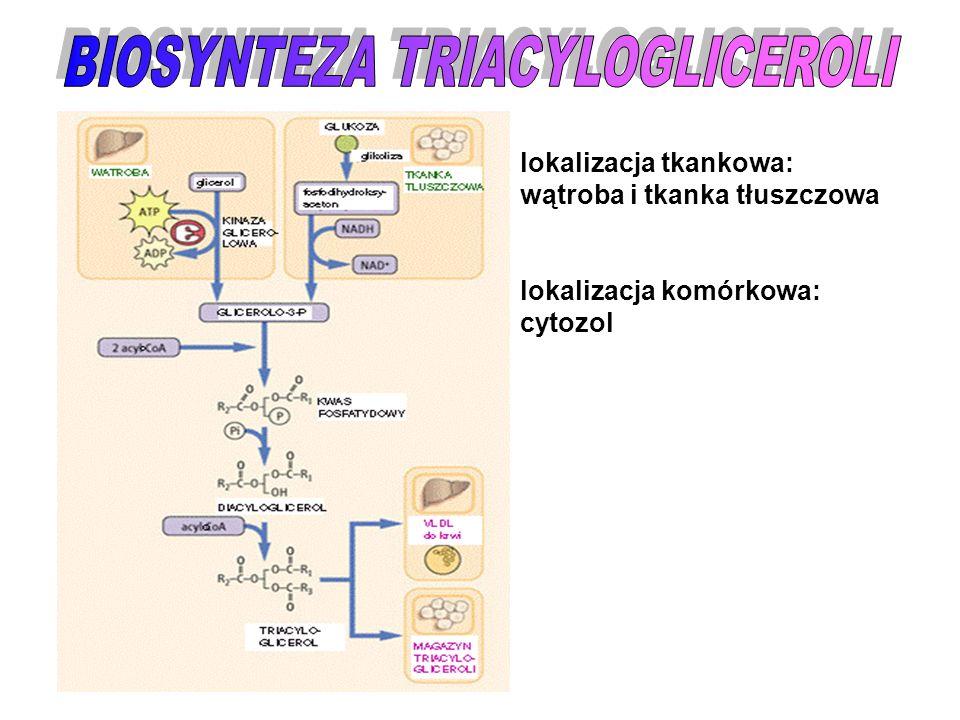 BIOSYNTEZA TRIACYLOGLICEROLI