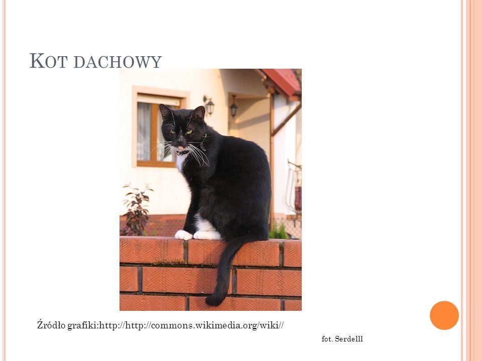 Kot dachowy Źródło grafiki:http://http://commons.wikimedia.org/wiki//