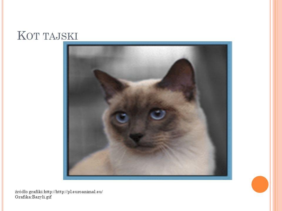 Kot tajski źródło grafiki:http://http://pl.euroanimal.eu/