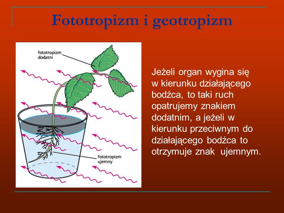 Fototropizm i geotropizm