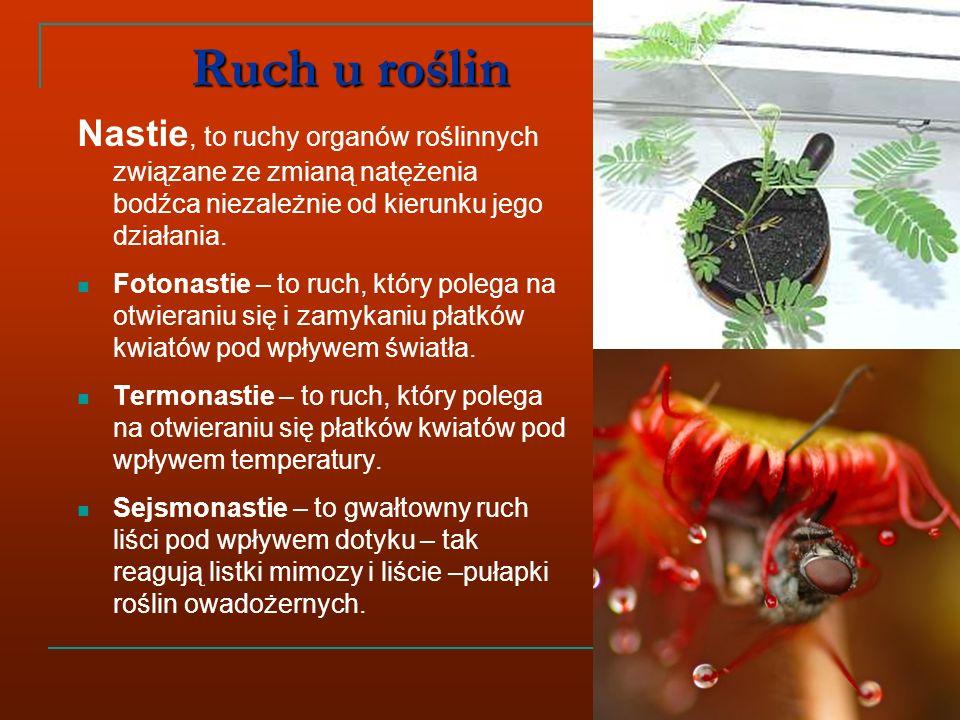 Ruch u roślin Nastie, to ruchy organów roślinnych związane ze zmianą natężenia bodźca niezależnie od kierunku jego działania.