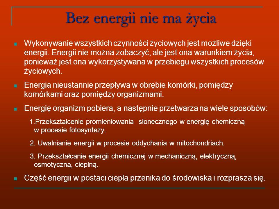 Bez energii nie ma życia